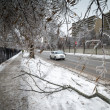 Stock Photo: Ice Storm