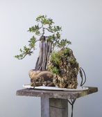 Bonsai Mini Mountains — Stock Photo
