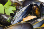 Moules Marinieres — Stock Photo