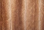 Fur texture - Stock Image. — 图库照片