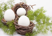 Easter eggs . — Stockfoto