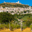 Stock Photo: Vineyard Bellow RoccMaggiore in Umbria, Assisi