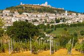 Vineyard Bellow Rocca Maggiore in Umbria, Assisi — Stock Photo