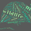 Rat wordcloud — Stock Photo