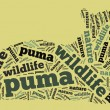 Puma wordcloud — Stock Photo