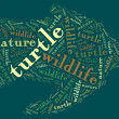 Turtle wordcloud — Stock Photo