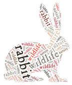 Rabbit wordcloud — Stock Photo