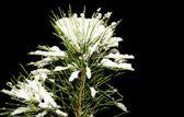 Navidad invierno ramas con nieve — Foto de Stock