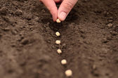 Seeding — Stock Photo