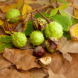 Composition of chestnuts — Stock Photo