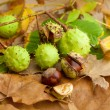 Composition of chestnuts — Stockfoto