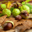 Composition of chestnuts — Stock Photo #32762851