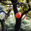 图库照片: Oriental lantern hanging on tree