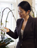 Pretty asian businesswoman admiring office plants — Stock Photo