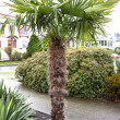 Tropical tree in landscaped area — Stock Photo #17850801