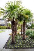 Tropikalne drzewa w ogrodzie miejskiego - mocno — Zdjęcie stockowe