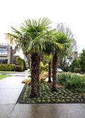 Tropical trees lining sidewalk — Stock Photo