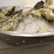 Stock Photo: Oysters in shell on ice