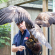 图库照片: Golden eagle and trainer