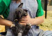 Cute bunny at fair — Stock Photo
