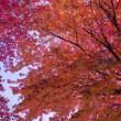 Stock Photo: Nice autumn leaves in pleasant neigborhood-1