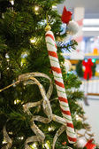 Candy cane on tree — Stock Photo