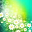 Stock Photo: Spring background with chamomiles