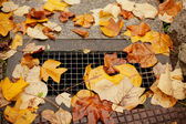 Drain full of autumn leaves — Stockfoto