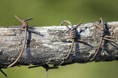 A close-up view of Rusted barbed wire on wooden stick — Stock Photo