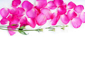 Background pink rose petals and flowers — Stock Photo