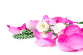 Rose petals and beads with flowers — Stock Photo