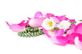 Rose petals background with flowers and beads — Stock Photo
