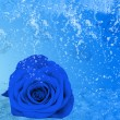 Royalty-Free Stock Photo: Beautiful blue rose, a lot of ice and water
