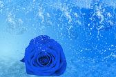 Vacker blå ros, en massa is och vatten — Stockfoto