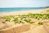 Grass on a sandy beach — Stock Photo