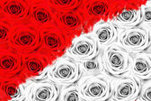 Many roses, half of the color, half of the black and white — Stock Photo