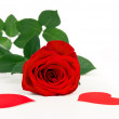 Red rose with hearts — Stock Photo