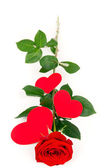 Long rose with hearts — Stock Photo