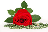 Red rose with gold rings — Stock Photo