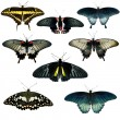 Collection of different butterflies — Foto de Stock