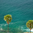 Vacation, palm trees, sea — ストック写真