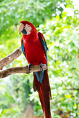 Bright, colorful parrot in the nature — Stock Photo