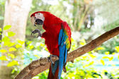 Bright, colorful parrot — Stock Photo