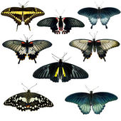 Collection of different butterflies — Stock Photo