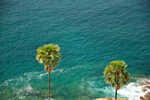 Vacation, palm trees, sea — Stockfoto