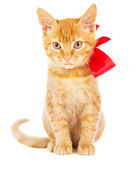 Beautiful red kitten with ribbon — Stock Photo