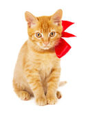 Playful young redhead kitty — Stock Photo