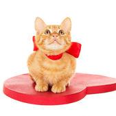 Redhead kitten sitting on the heart — Stock Photo