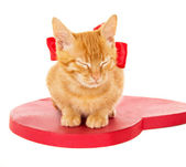 Redhead kitten with ribbon sitting on the heart — Stock Photo