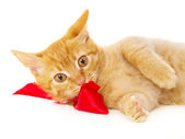 Young redhead cat lies on the floor in the red ribbon — Stock Photo